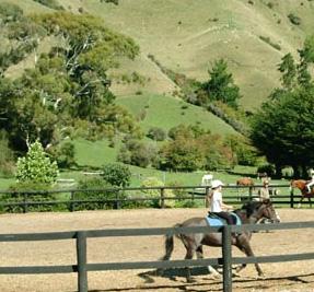 Stonehurst Farm Horse Treks